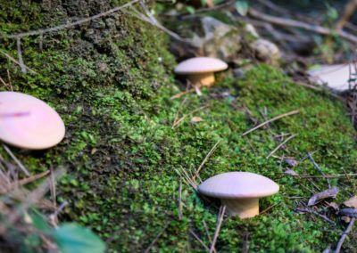Conjunto de tiradores bolet en el bosque